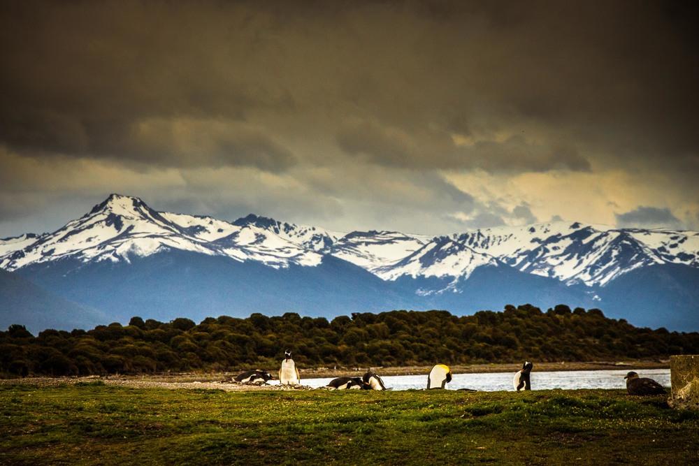 Penguin Island, Patagonia