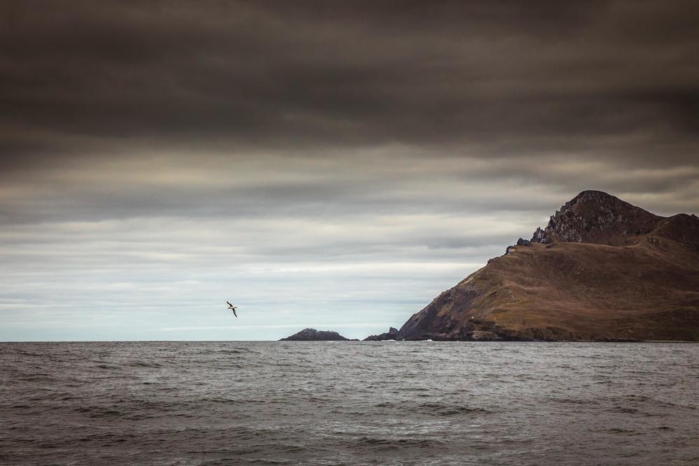 Albatross circles Cape Horn