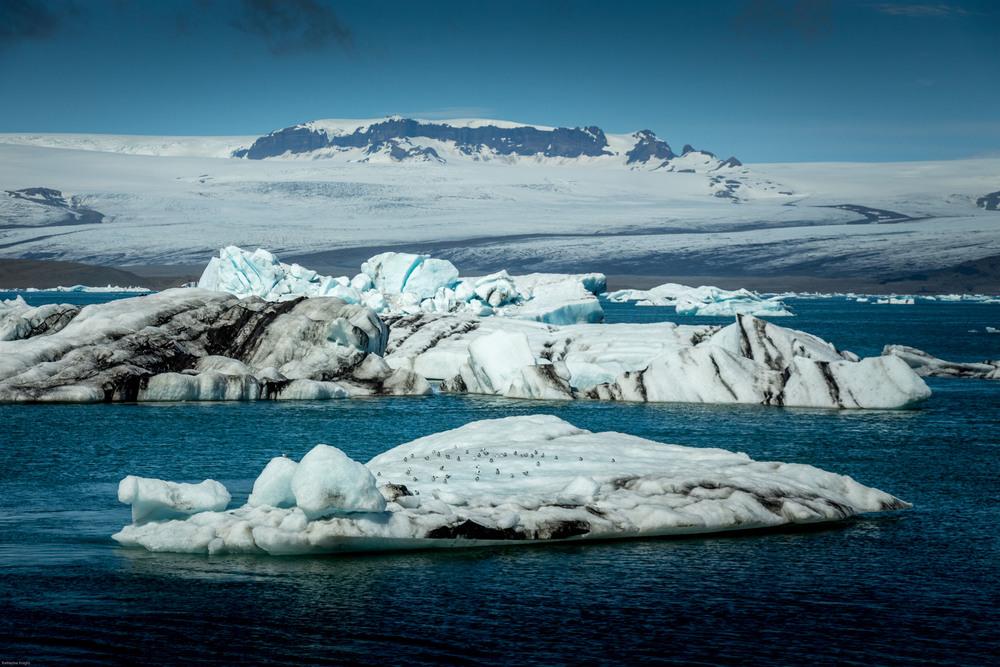 Icebergs from calving glacier
