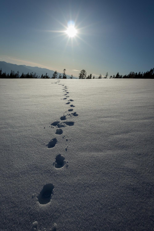 Mount_Shasta_14_04_26_411.jpg