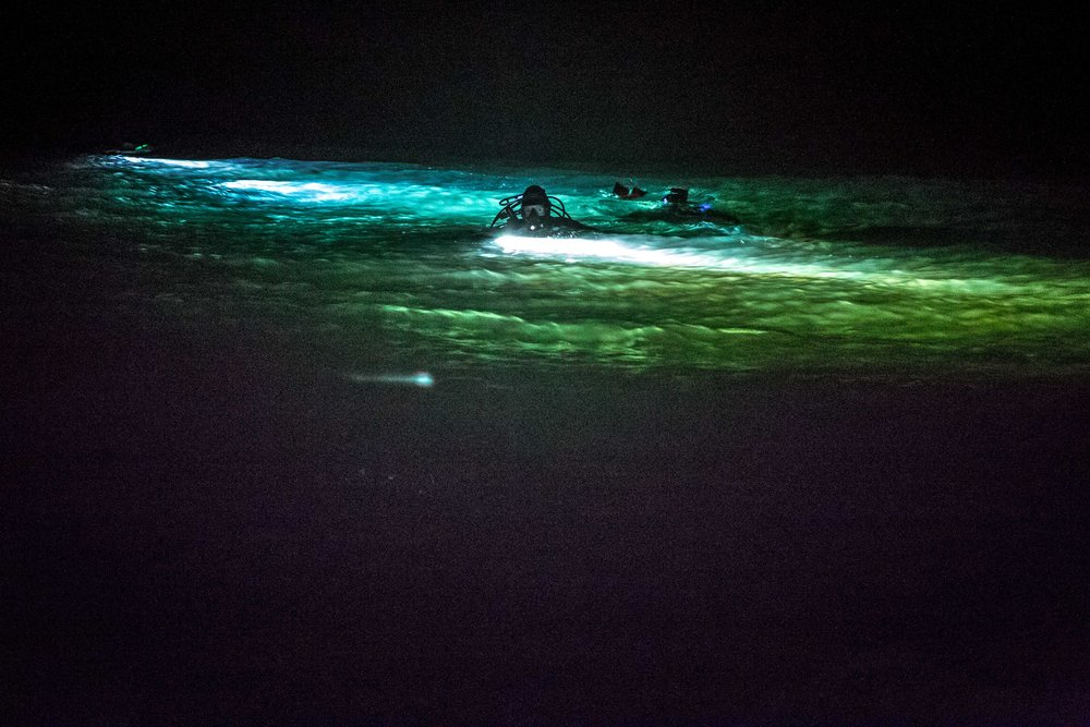 Night_dive-3.jpg