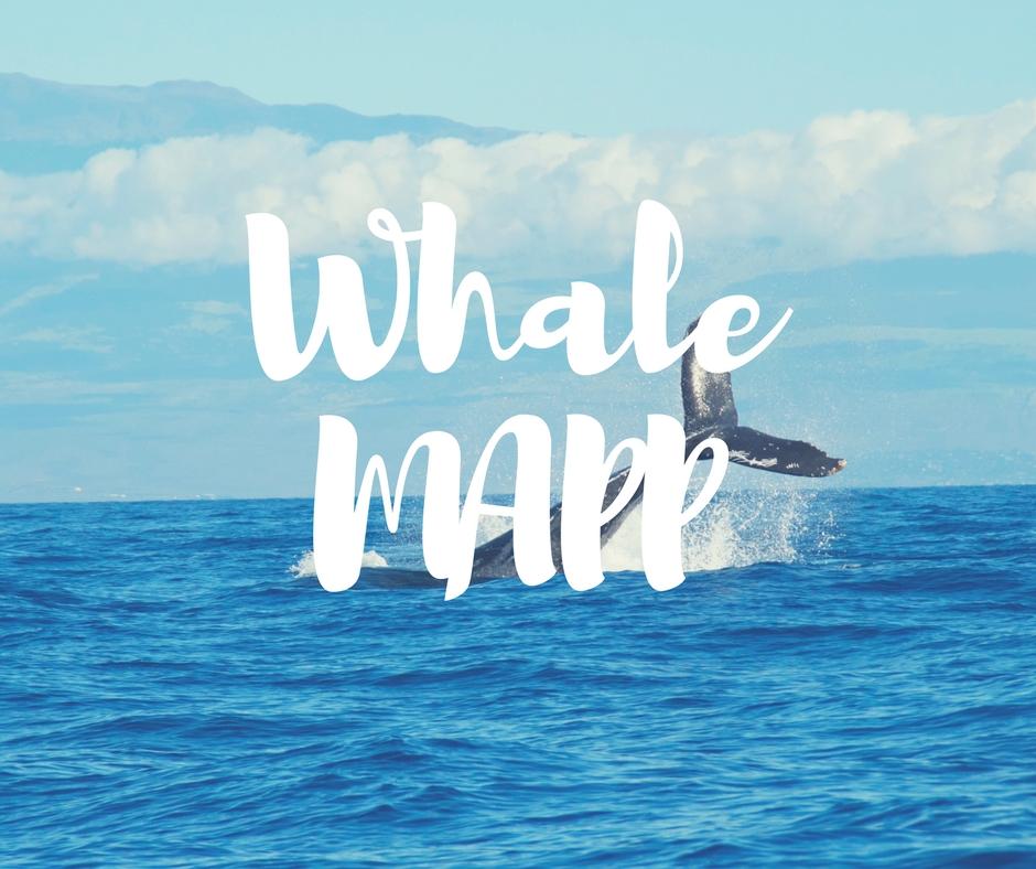 WhaleMAPP.jpg