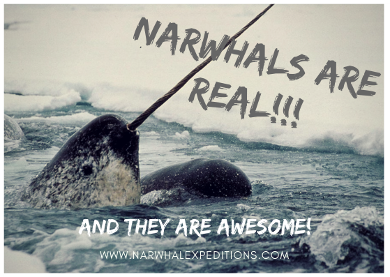Narwhals are real!.png