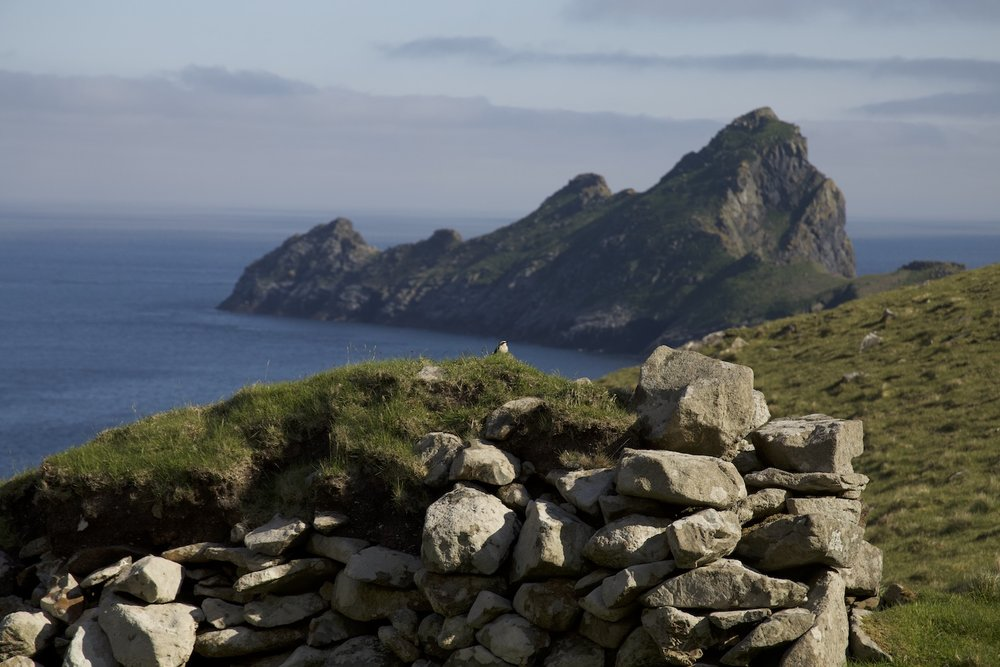 The St Kilda wren, with a pretty stunning back drop