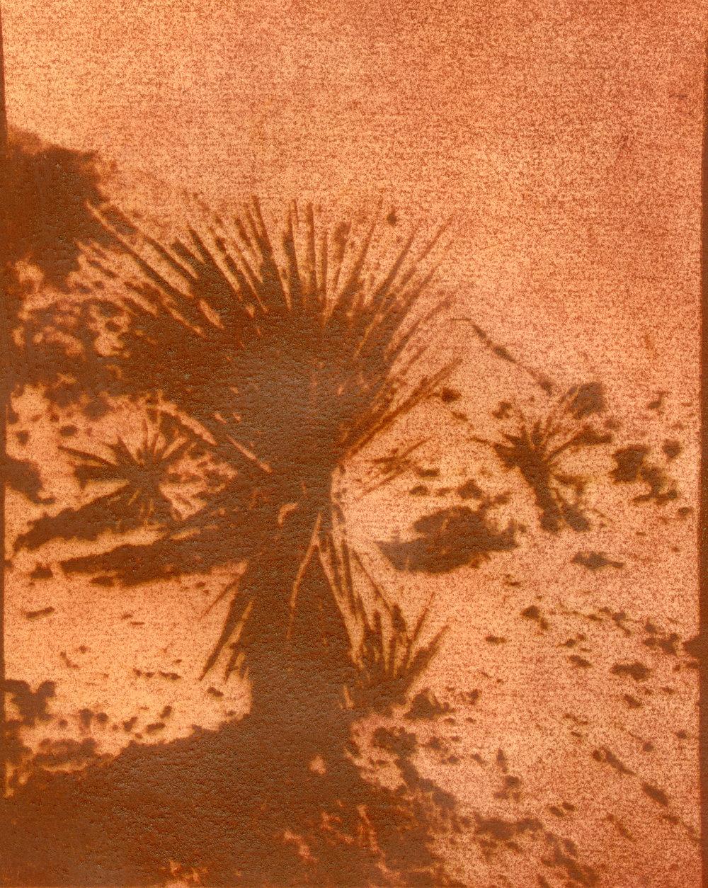 Yucca.v.1.jpg