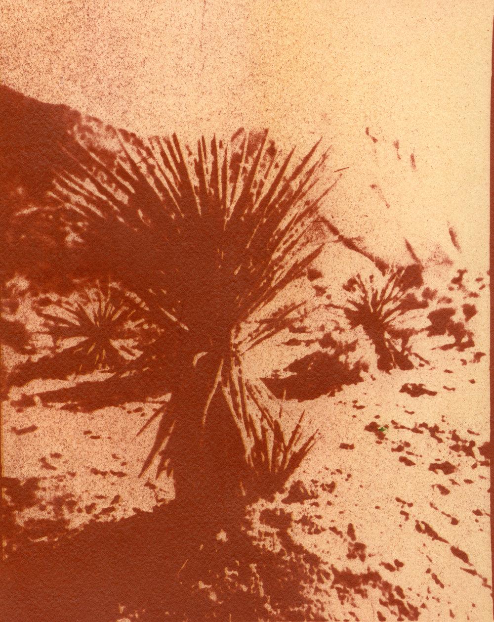 Yucca.v.3.jpg