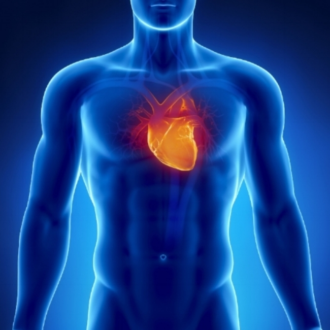 When training to improve conditioning, you are effectively training the heart. You are trying to train the heart to be able to pump blood around the body fast enough to maintain the activity you are doing (walking, working, training etc.). When designing a conditioning programme, coaches need to know the ultimate goal of the person. In this blog, the focus will be on the person who is looking to improve their lifestyle.