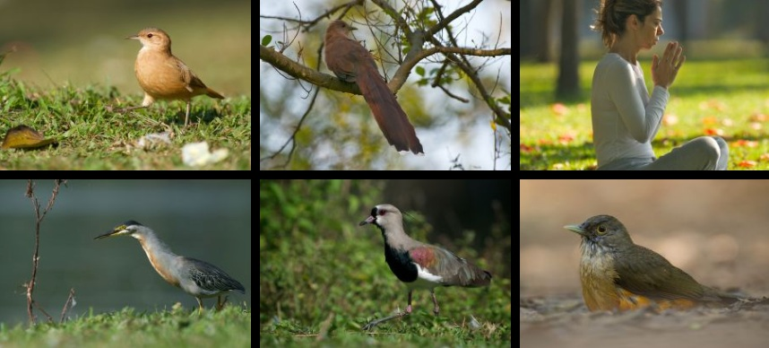 source: Hans Overduin Photography. Check out his  post about birds in Ibirapuera park