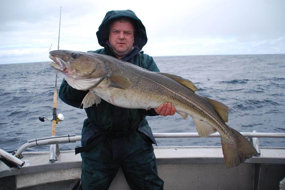 En af de større torsk for tiden