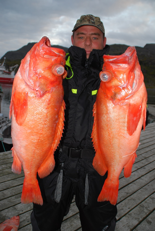 Per med store rødfisk