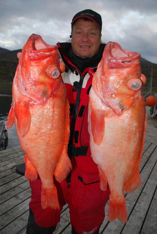 store rødfisk