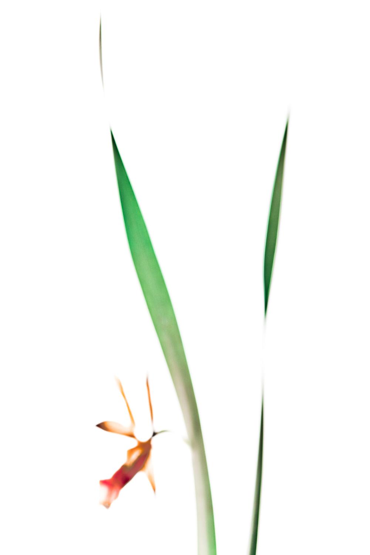 Tsai-Tsai 02