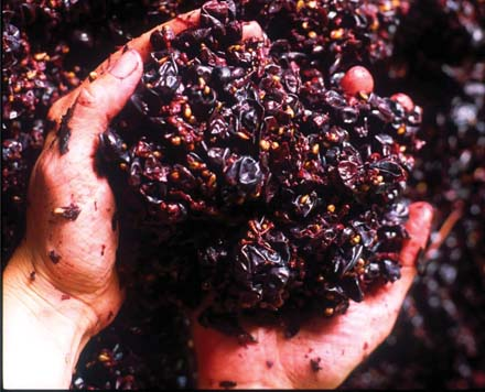 Tannins come from the skin of the grape.