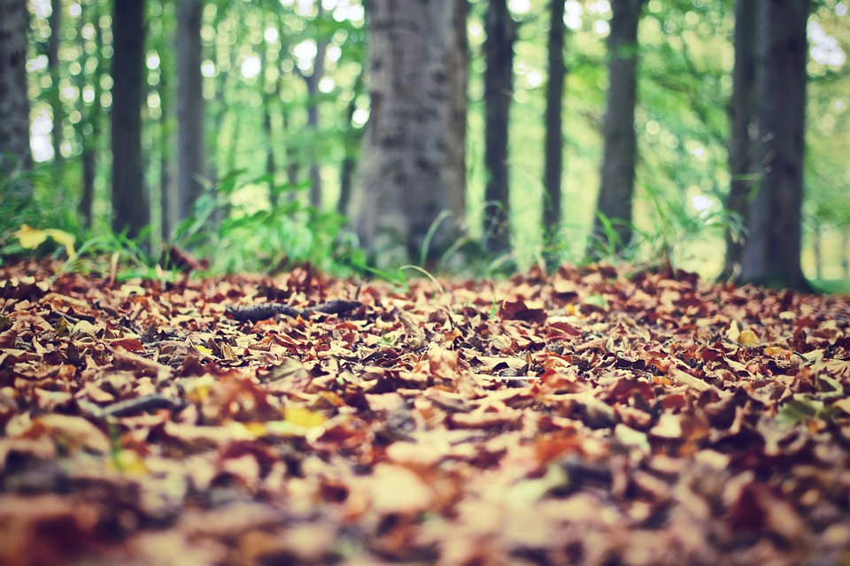 "Forest floor is a common wine term that can be considered ""earthy"""