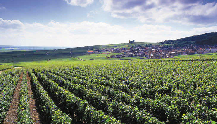 More than just an idillic scene, terroir defines just how amazing a wine can be.