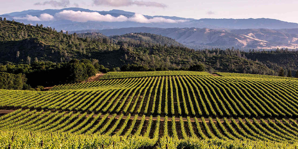 Its just beautiful isn't it? California's wine landscape is full of hidden treasures off the beaten path.
