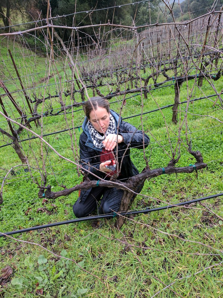 Martha's deep understanding of how grapes are transformed into the wines we loves starts at the very beginning, from bud, to berry, to harvest and all the way to bottle.