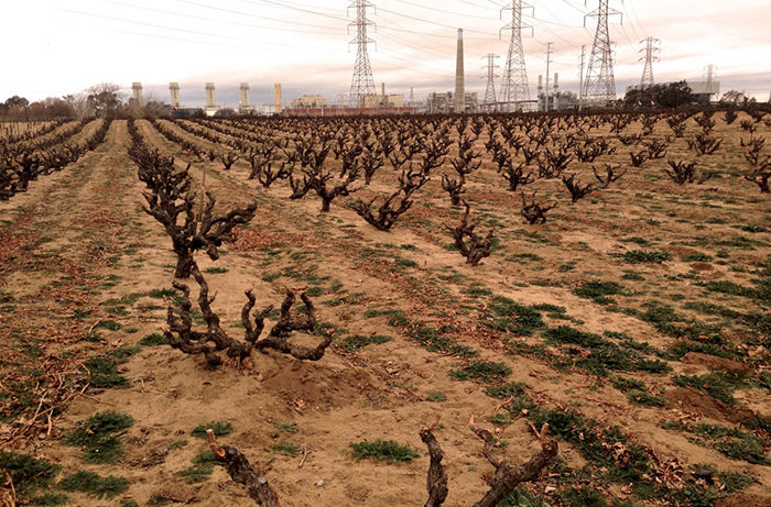 Hardly the most picturesque vineyard. Nestled below a power plant the Evangelho vineyard has stood the test of time to produce some amazing Zinfandel.