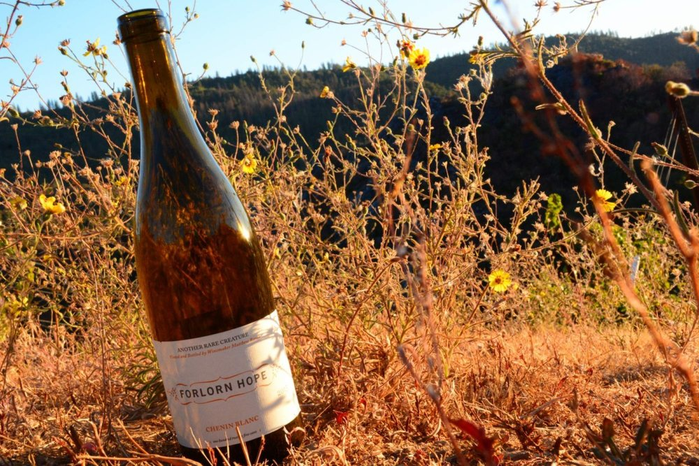 Glorious Forlorn Hope Chenin Blanc from California is paving the way for Chenin from some of the hottest winemakers.