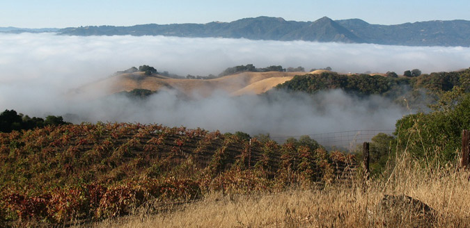 Poor Ranch Vineyard with the fog rolling in, the source of Forlorn Hope's Carignan