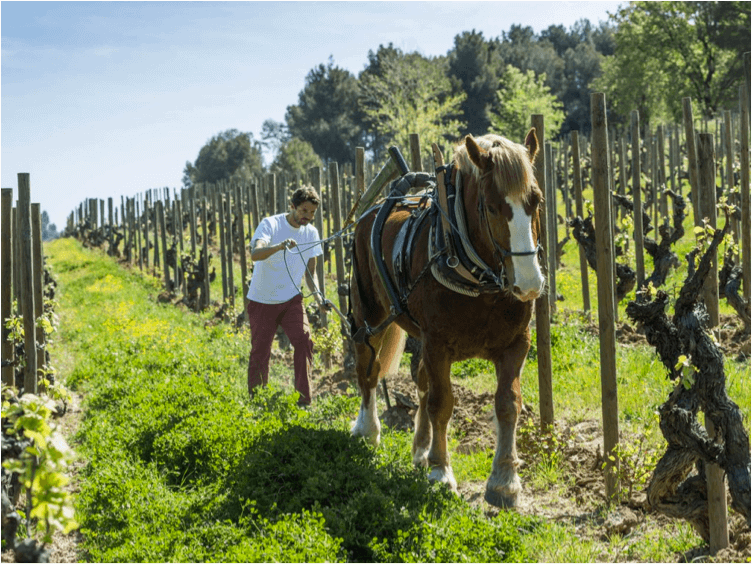 Pepe Raventos true to his word and practicing biodynamic viticulture in his vineyards. A steadfast devotion to these methods has allowed him to unlock the magic of his Conca del Riu Anoia appelation.
