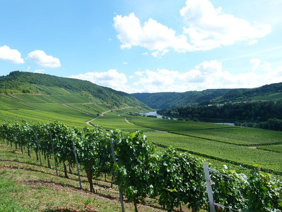 vineyard-2776084_960_720.jpg