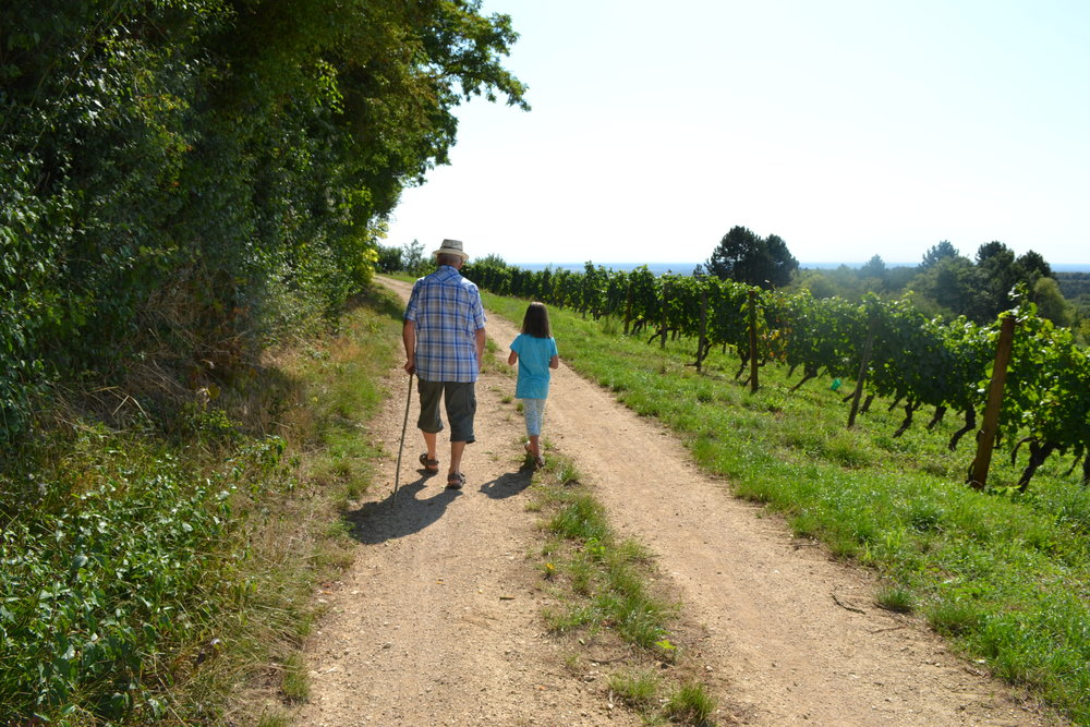 Clémentine and her Papy taking their daily constititional around the vineyards of the Mont Saint Victor.