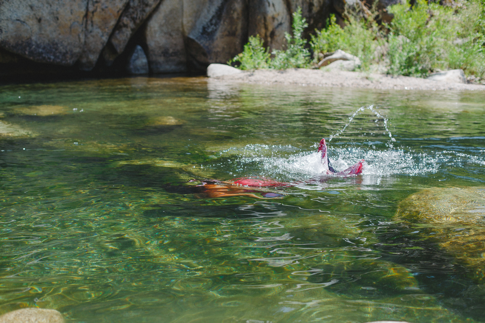 Mermaid swimming in the Yuba River