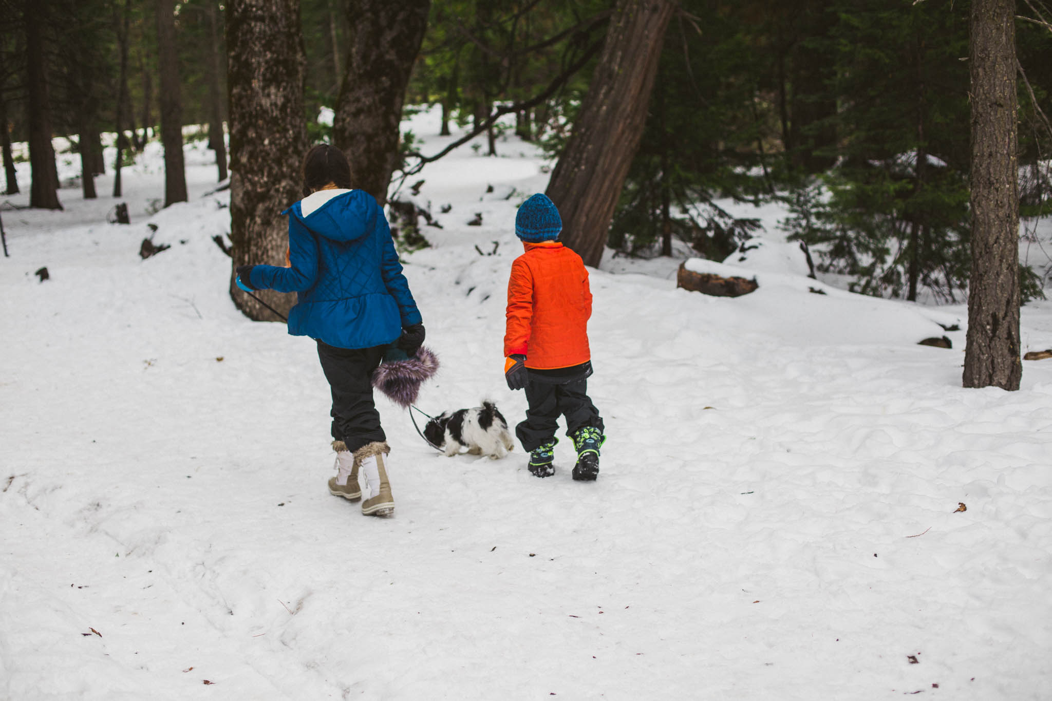 Kids and puppy walk in the snow