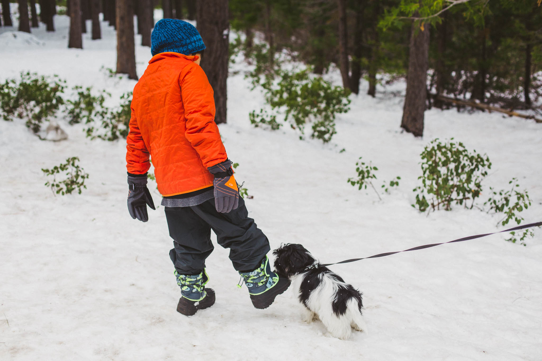 Children and puppy play and sled in the Sierra snow