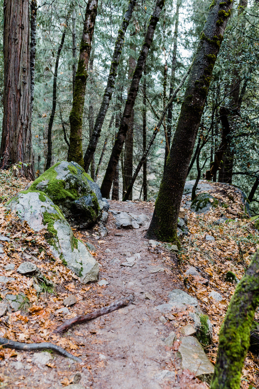 Deer Creek Tribute Trail | Lenkaland Photography