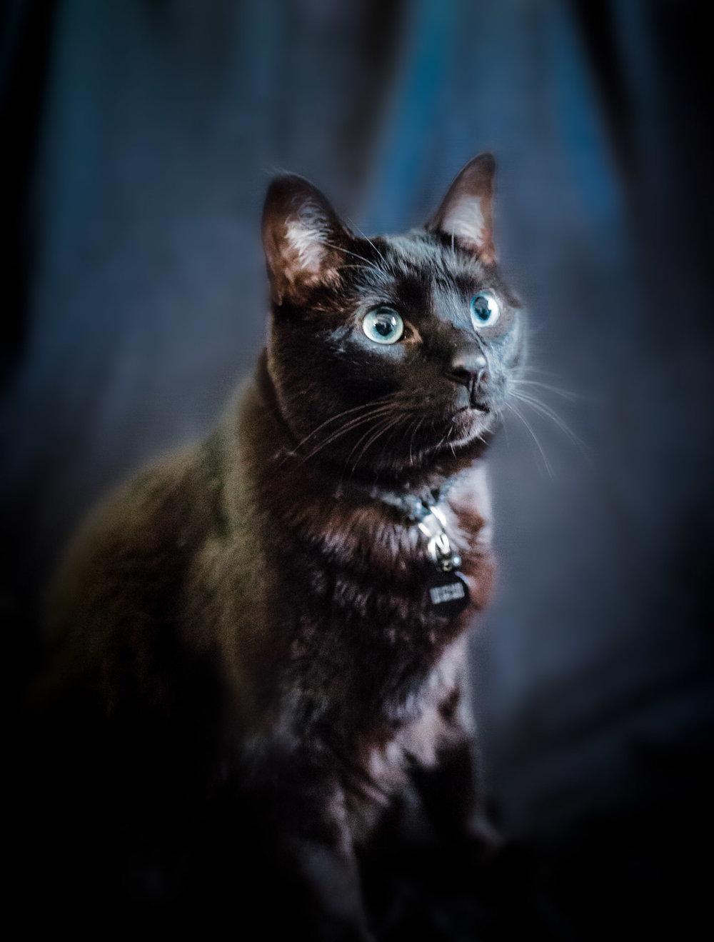 Pet Photography | Lenkaland Photography