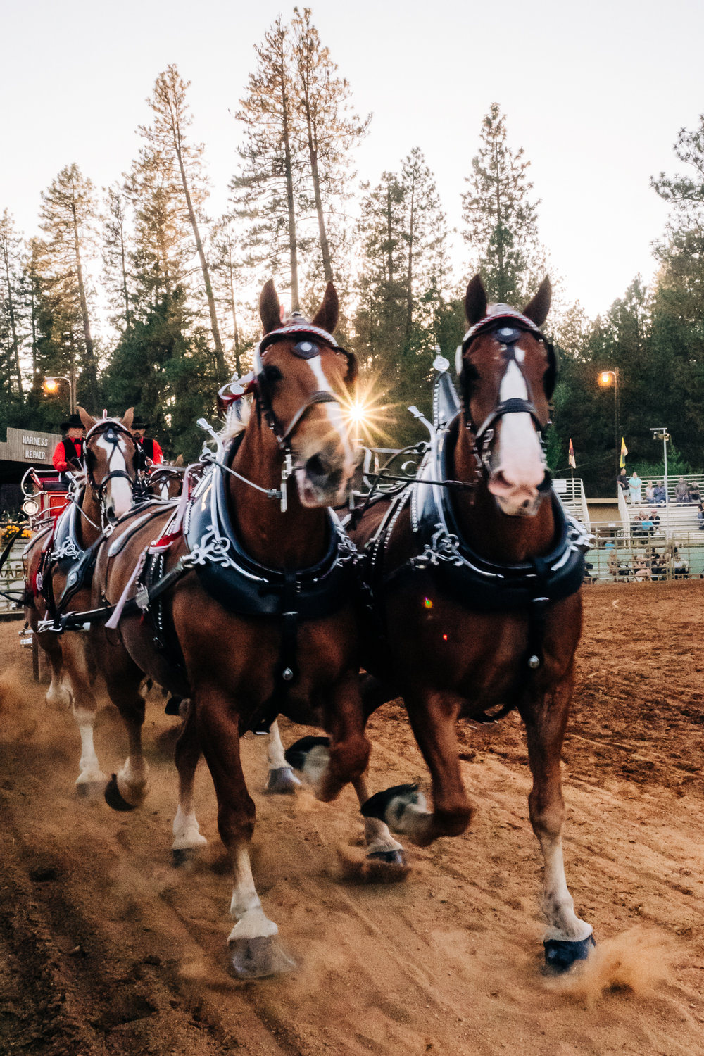 Draft Horse Classic at the Nevada County Fairgrounds | Lenkaland