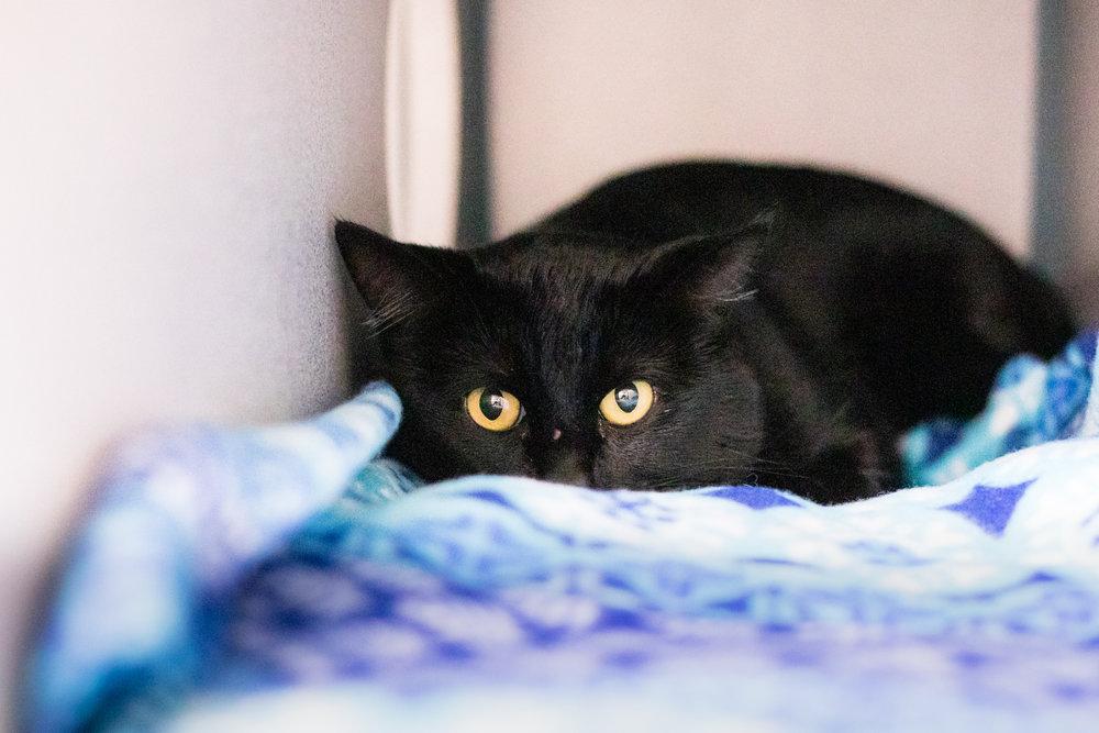 Cats at AnimalSave | Photo by Lenkaland Photography