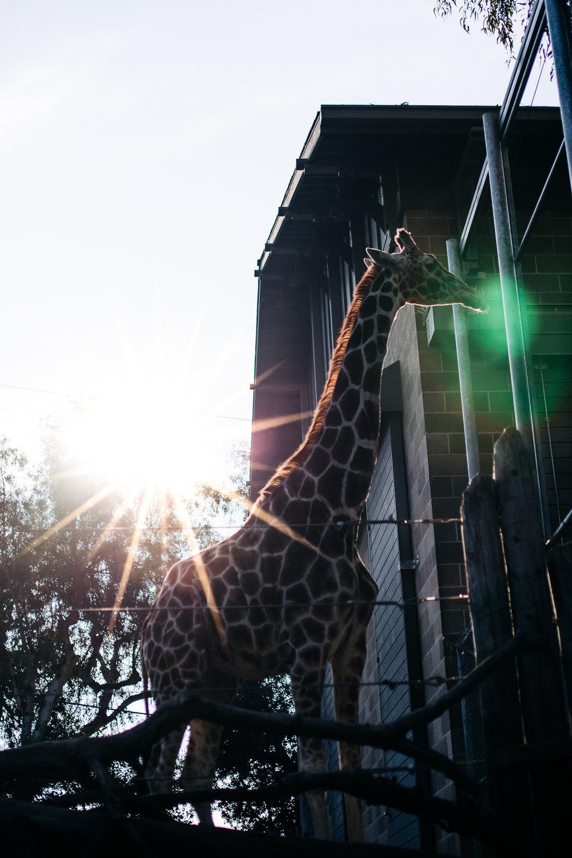 Sacramento Zoo by Lenkaland Photography