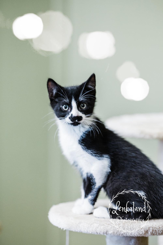Animal Save   Cats   Lenkaland Photography