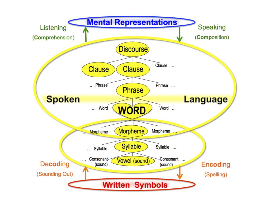 "In this diagram, the ""Spoken Language"" bubble in the  ALL model  has been expanded to show the levels of spoken language."