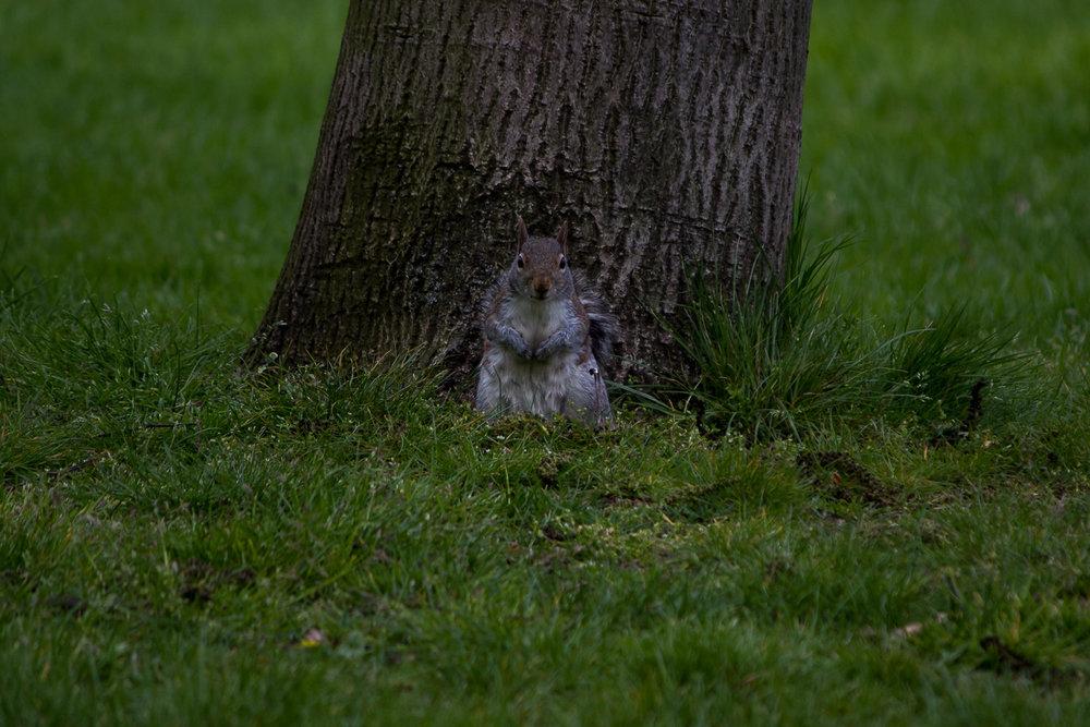 écureuil Londres sous-exposée