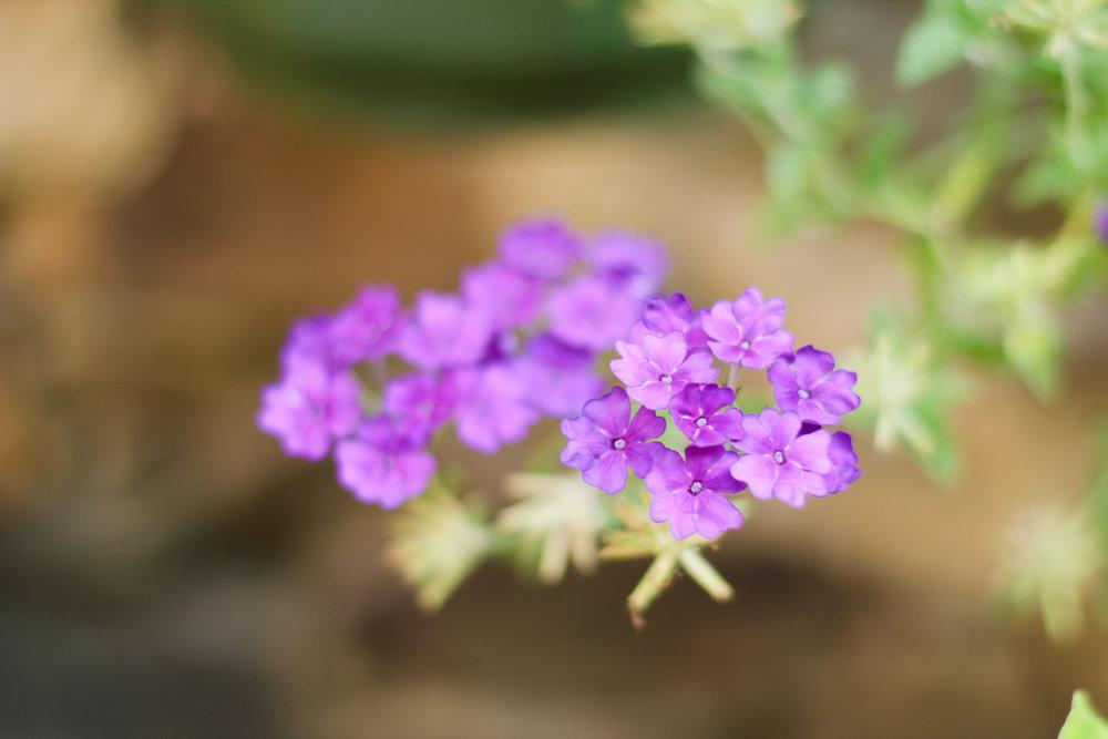 Fleur faible profondeur de champ