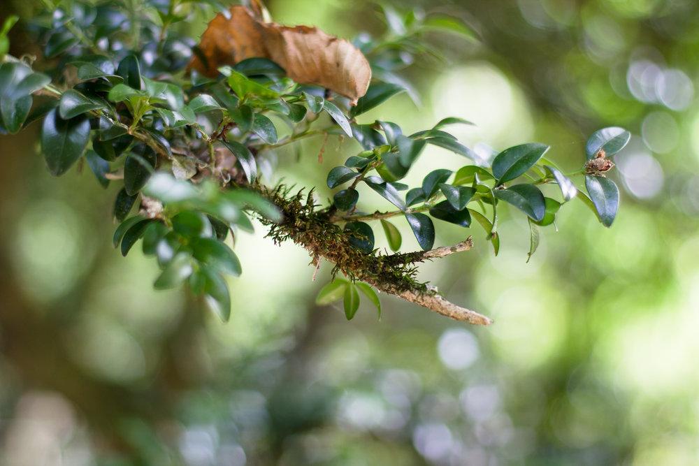 Branches faible profondeur de champ