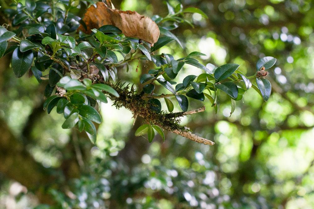 Branches grande profondeur de champ