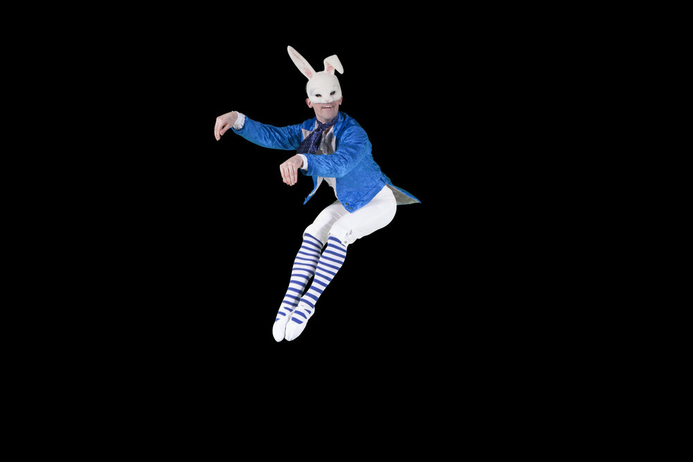 white rabbit.jpg
