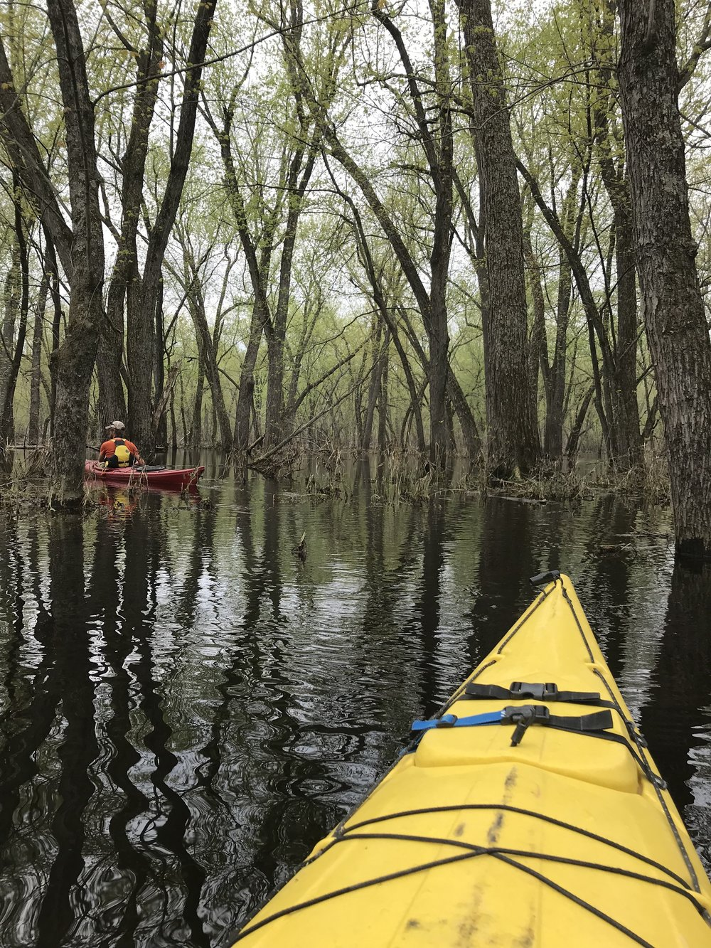 Lake Pepin flooded forest tour with Broken Paddle Guiding
