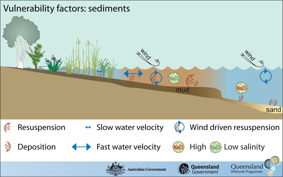 This graphic shows how fine sediments, flowing water, and wind contribute to greater sediment resuspension (AKA Turbidity). The salinity is more important for saltwater ecosystems.