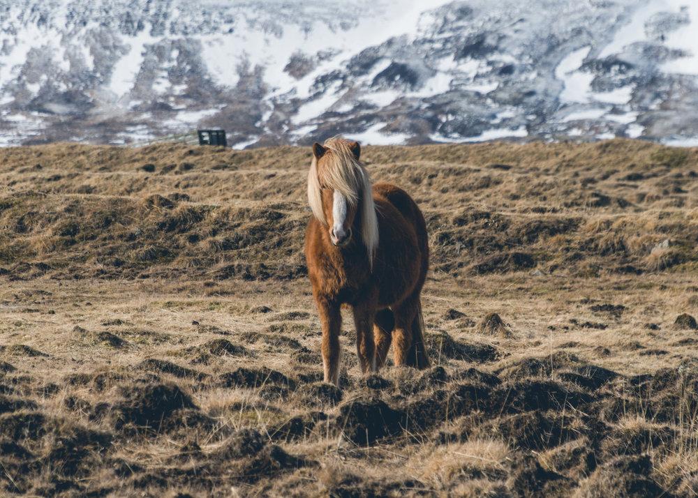 1803_Iceland-70.jpg