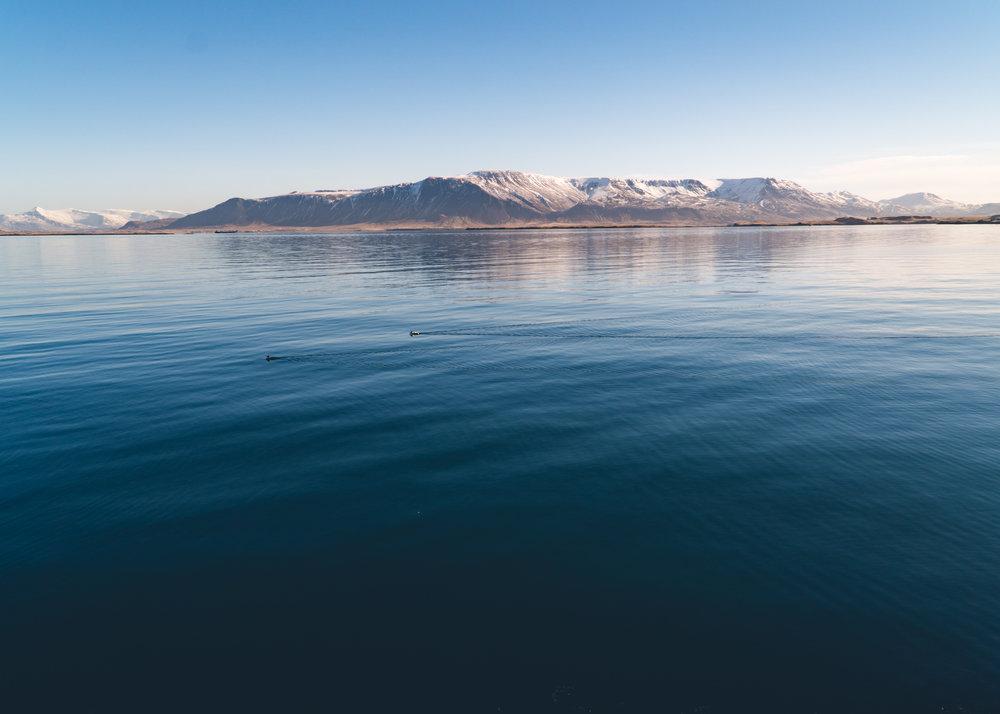 1803_Iceland-141.jpg