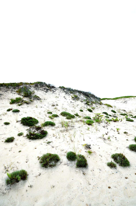 Single shot Horseneck dunes