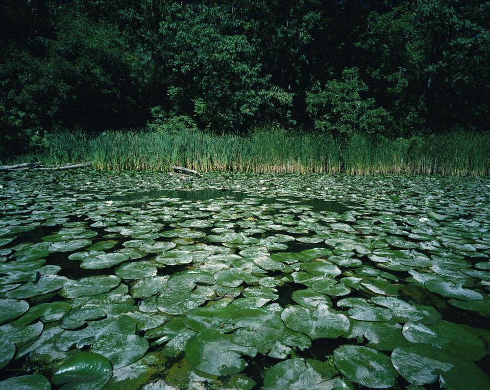 Humber Marsh (2003)