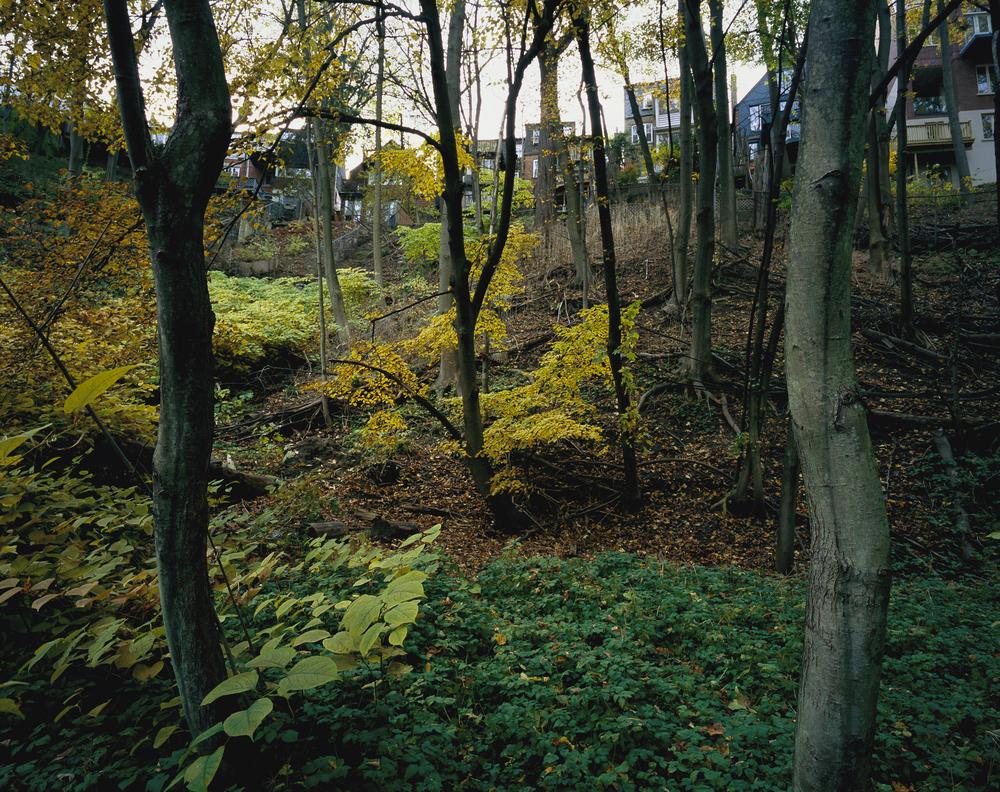 Sub-division, Val'd'Avoca Ravine (2003)