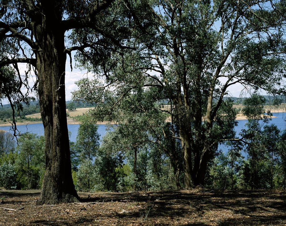 Sugarloaf Woods (2010)